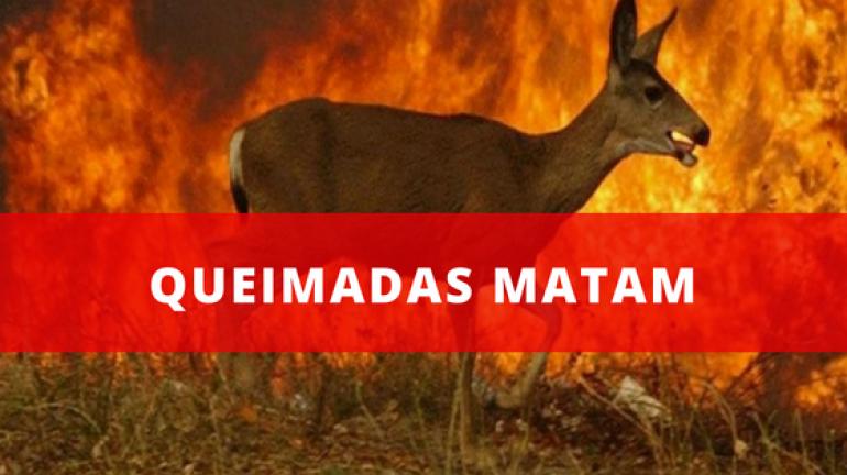 Queimada, uma prática de 12 mil anos que segue matando