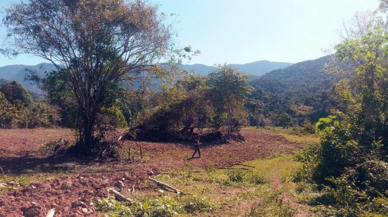 Rio de Janeiro contra o desmatamento: como o Olho no Verde monitora a Mata Atlântica por satélite e previne crimes ambientais