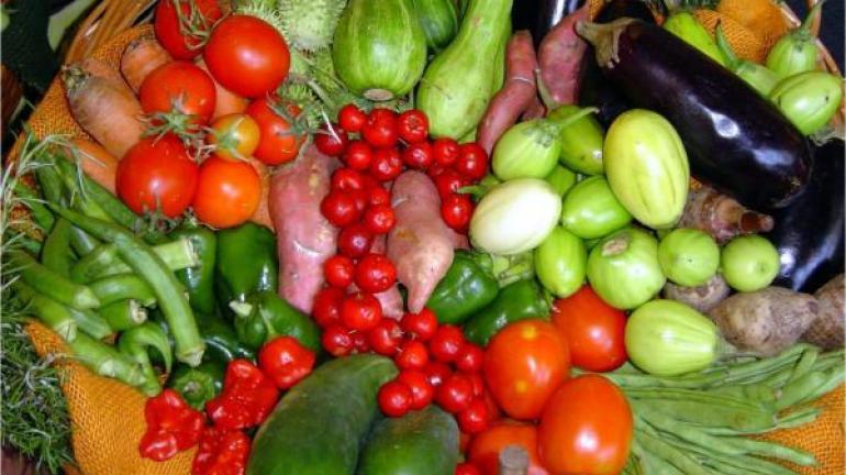 Agricultura e Sebrae Fomentam Cadeias da Agropecuária Fluminense