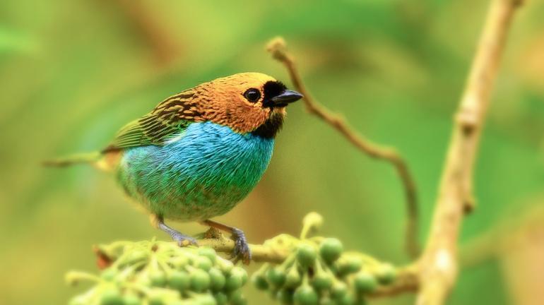 Parques Estaduais promovem eventos de observação de pássaros simultaneamente no 'Big Day Brasil'