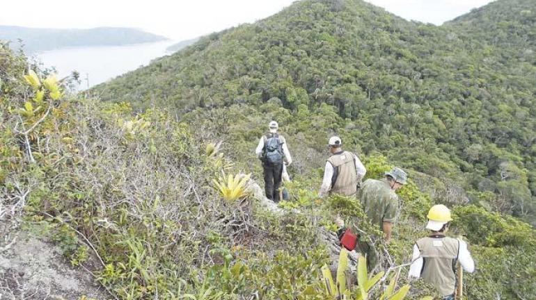 Estado luta por espécies florestais