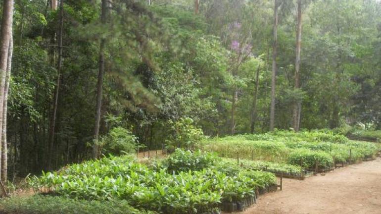 Secretaria do Ambiente cria a primeira Floresta Estadual do RJ, em Trajano de Moraes
