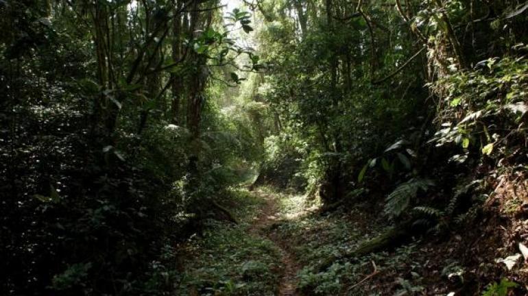 Parque Estadual do Desengano promove curso de capacitação sobre apicultura