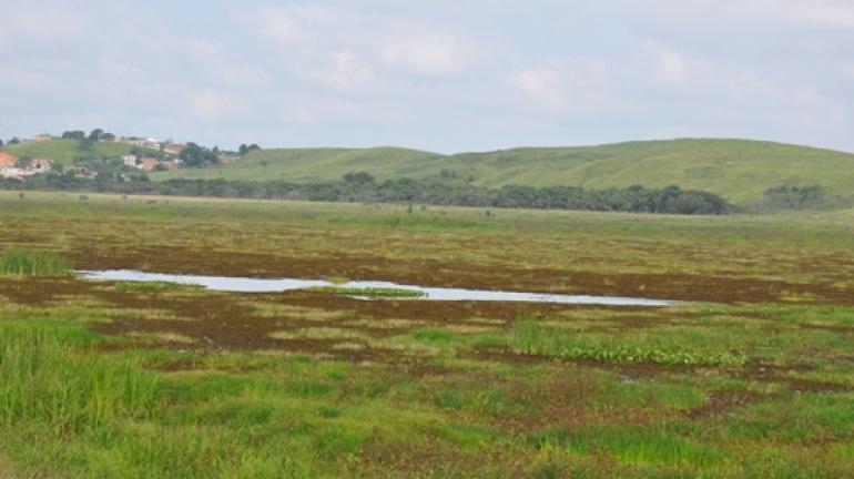 Criação do Refúgio da Vida Silvestre Lagoa Turfeira garante preservação da biodiversidade na Região do Médio Vale do Paraíba