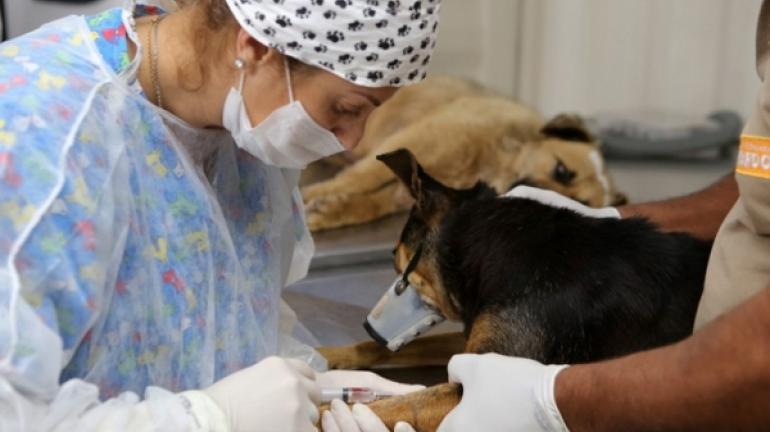 Mais 600 animais serão castrados em Petrópolis em campanha que começa na segunda-feira
