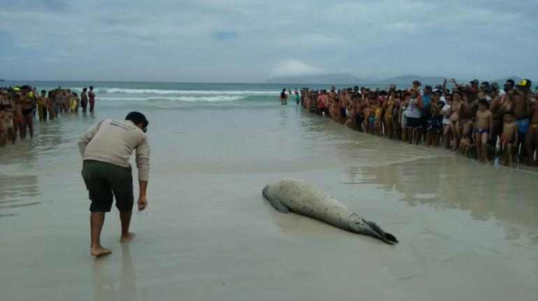 Animal marinho aparece na Praia de Cabo Frio e recebe auxílio de equipe do Inea
