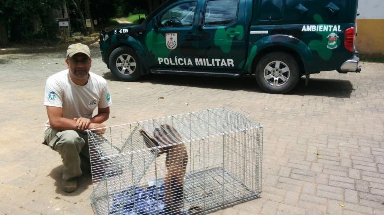 Bugio suspeito de atacar moradores no município de Cordeiro é capturado