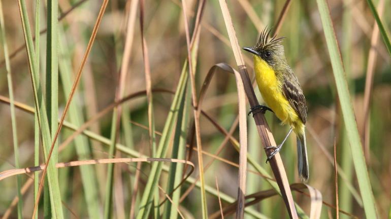 Observadores de pássaros registram mais de cem espécies de aves no Parque Estadual da Serra da Tiririca