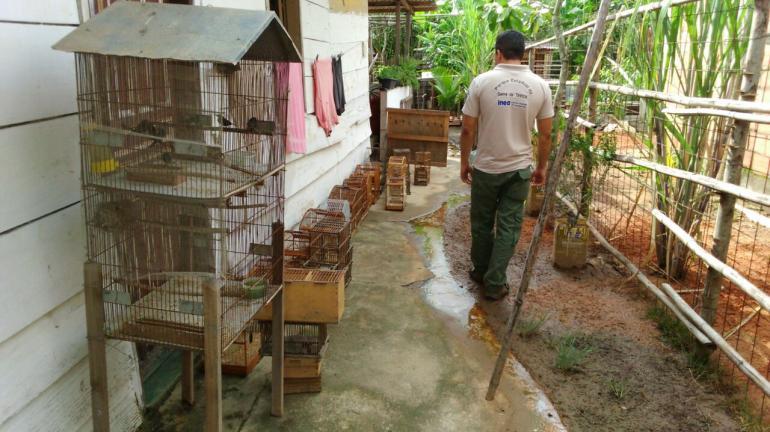 Operações da Polícia Ambiental e do Instituto Estadual do Ambiente apreendem mais de 50 pássaros silvestres