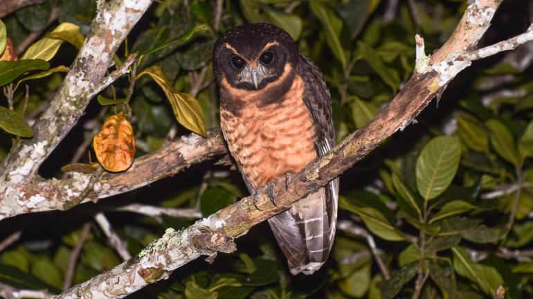 Avistar Rio 2016 reúne apaixonados por aves no Parque Lage, Zona Sul do Rio