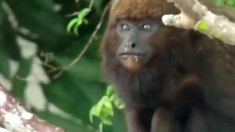 Primata é resgatado por equipe do Parque Estadual do Desengano