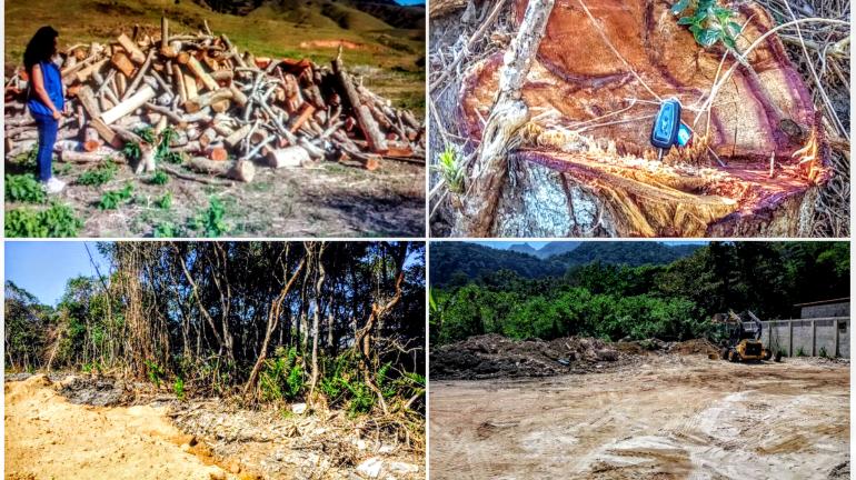 Inea deflagra fiscalização em nove municípios fluminenses para combater desmatamento ilegal