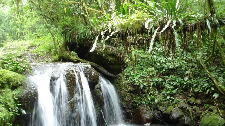André Corrêa vai participar da entrega dos Planos Municipais de Conservação e Recuperação da Mata Atlântica do Noroeste Fluminense
