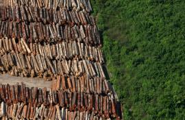 Secretaria de Estado do Ambiente lança Projeto Olho no Verde contra desmatamento e divulga ranking de municípios que mais desmataram no ano de 2016