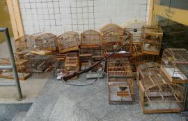 Upam Desengano flagra corte de madeira nativa em Santa Maria Madalena