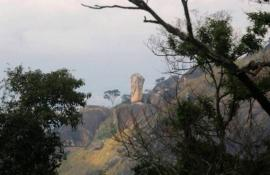 Inea amplia área de fiscalização para combater desmatamento