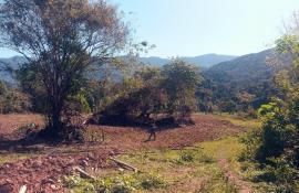 Secretaria e Inea combatem desmatamento em Paraty