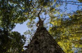 Inventário florestal identifica 904 espécies endêmicas no RJ