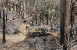 Secretaria de Estado do Ambiente e  Instituto Estadual do Ambiente deflagram fiscalização no Parque Estadual Cunhambebe para combater desmatamento ilegal