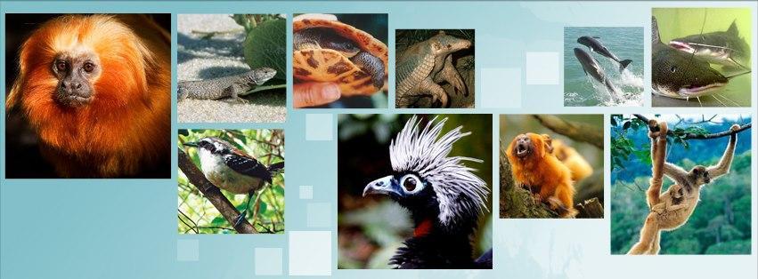 Preservação de espécies ameaçadas de extinção: abrace essa causa