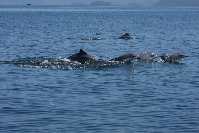 Ações de preservação da vida marinha estão no foco de projetos e workshops no Rio de Janeiro
