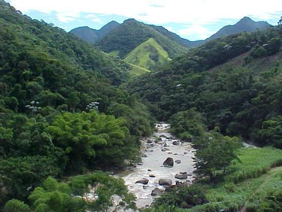 Estudo aponta municípios do Rio de Janeiro que mais regeneraram a Mata Atlântica