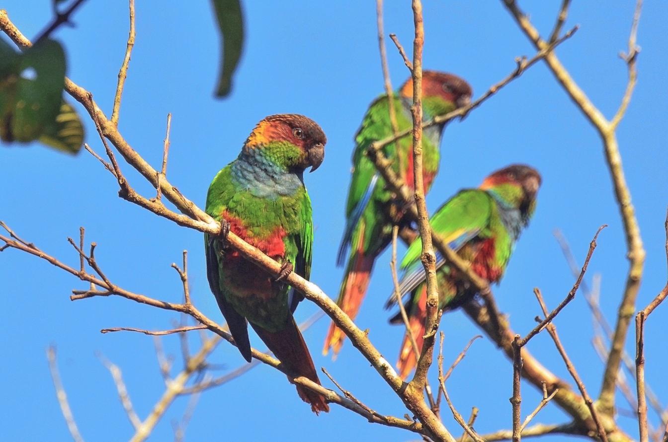 Parques estaduais fluminenses participam de evento de observação de pássaros