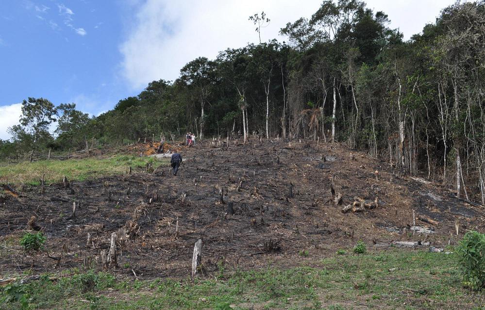 Parque Estadual Cunhambebe flagra desmatamento e produção de carvão em Rio Claro