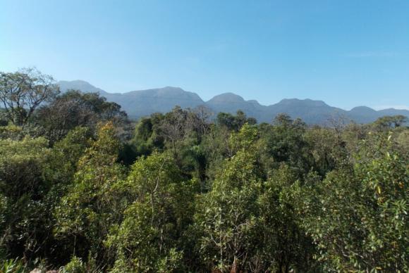 Rio lança projeto Olho no Verde que pode impedir desmatamento ilegal