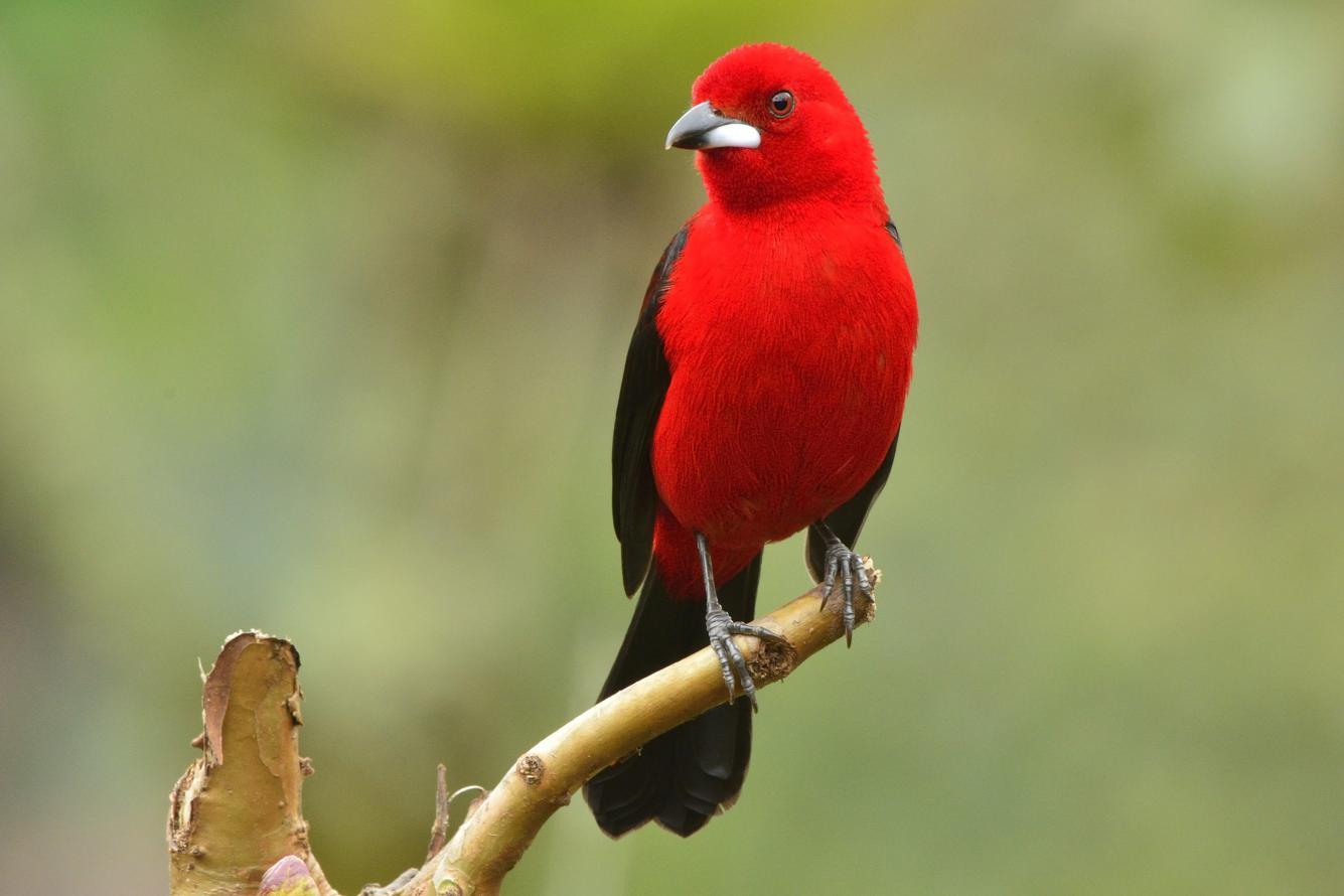 Pássaros apreendidos em operações fiscalizatórias são devolvidos à natureza