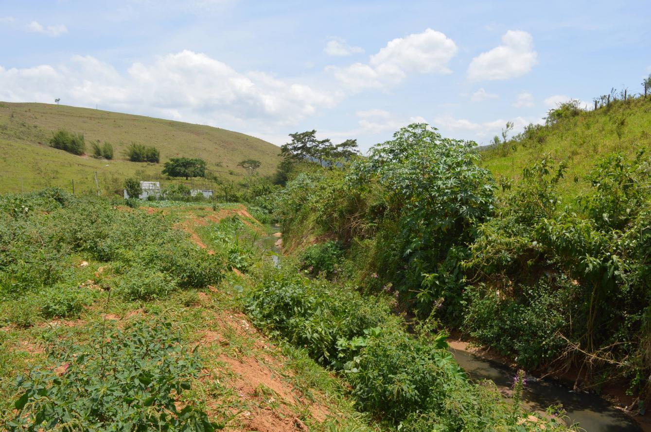 Rio das Flores vai receber o plantio de um milhão de mudas nativas de Mata Atlântica, em Valença, região Sul Fluminense