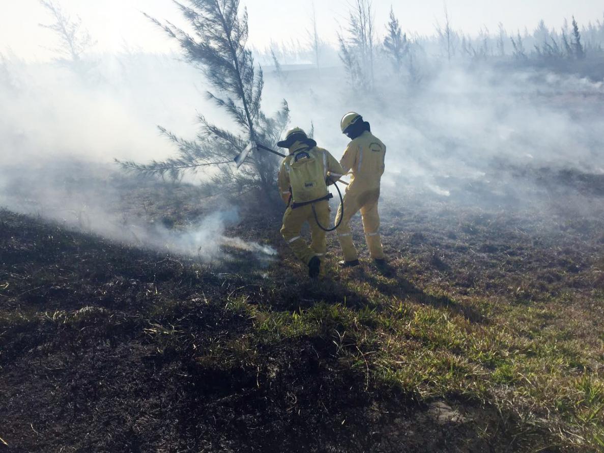 Bombeiros de todo o Estado e Guarda-Parques do Instituto Estadual do Ambiente trabalham no combate a incêndios desde o fim de semana