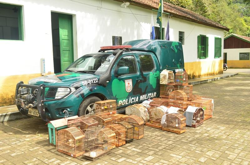 Operações da Polícia Ambiental apreendem 58 pássaros silvestres em Campos e Itaocara