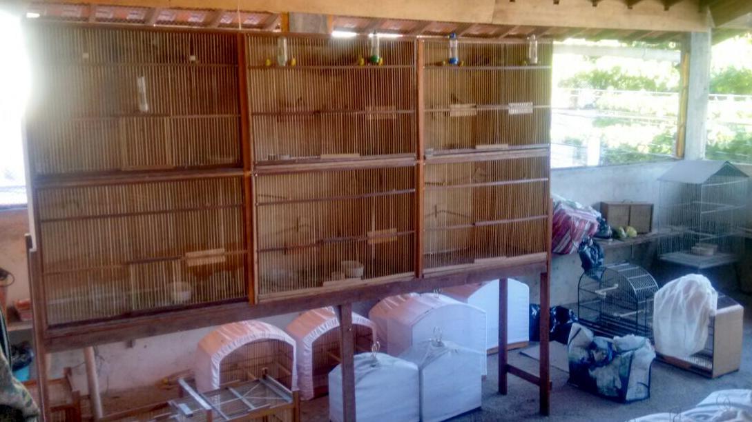 Mais de 50 pássaros são apreendidos durante operação, em Niterói