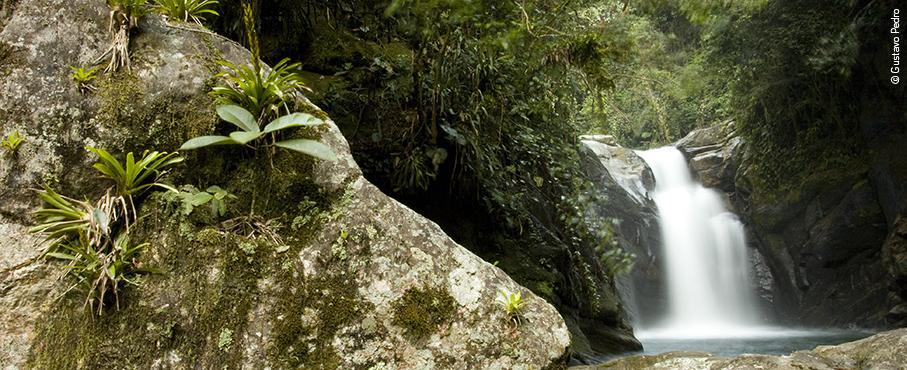 Instituto Estadual do Ambiente apoia plantio de mudas em Cachoeiras de Macacu