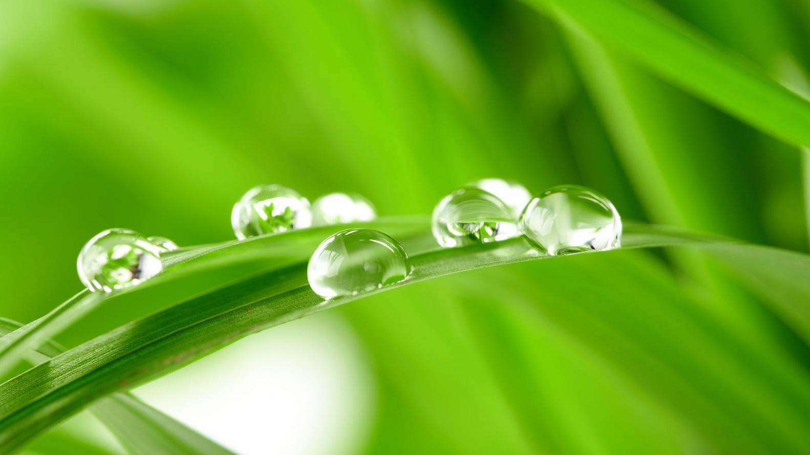 Menos burocracia e mais eficiência: Modernização do licenciamento é tema de apresentação na Semana do Meio Ambiente