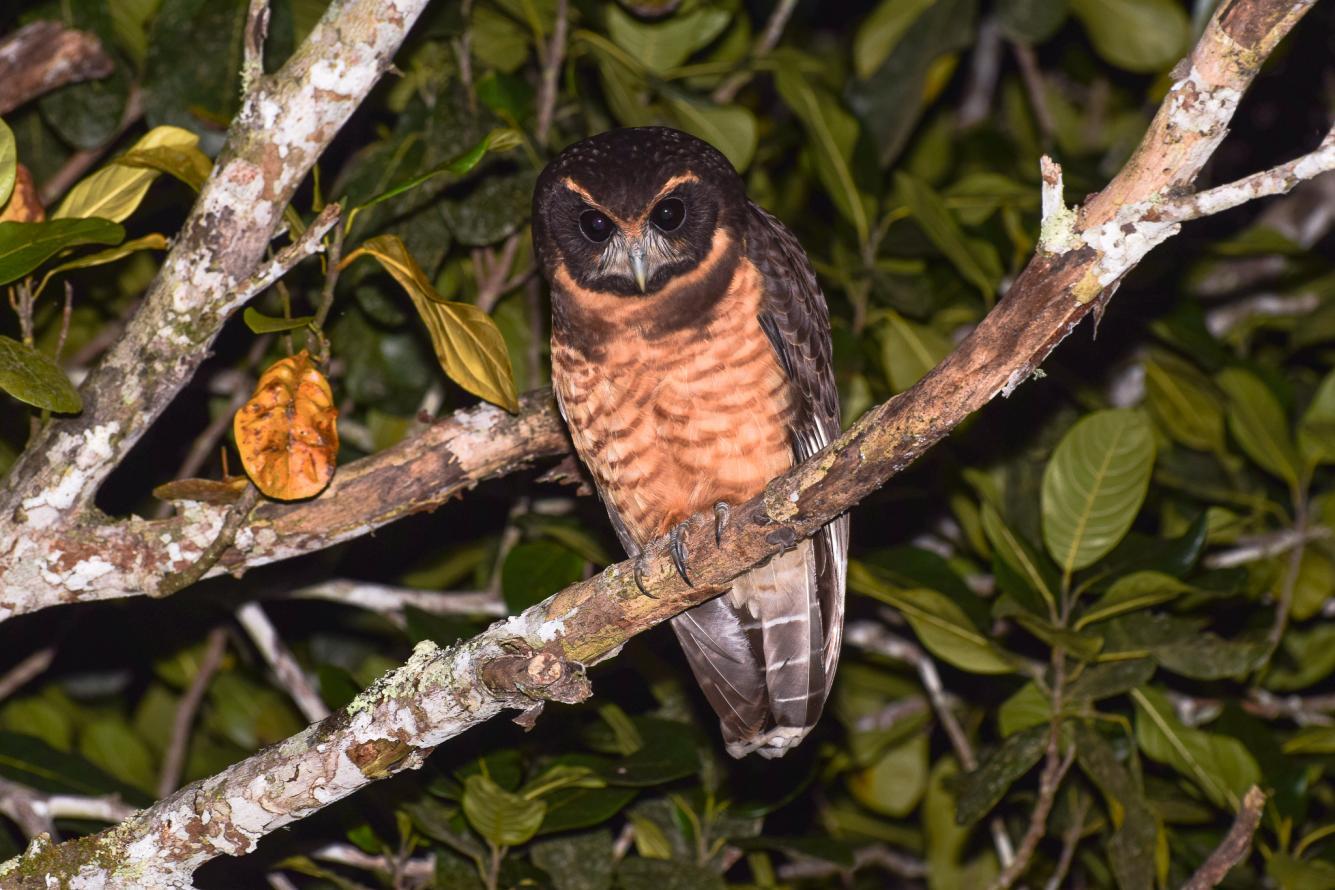 Projeto Vem Passarinhar no Parque Estadual da Pedra Branca registra mais de 80 espécies de aves