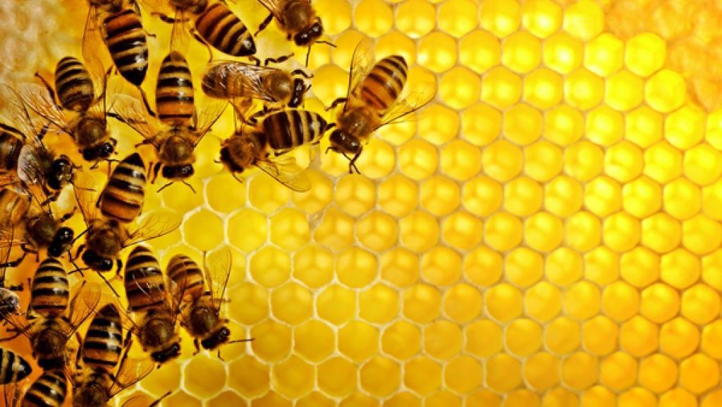 Parque Estadual do Desengano abre inscrições para cursos de apicultura