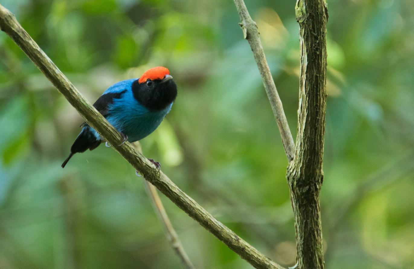 Observadores de pássaros registram mais de cem espécies de aves na Reserva Ecológica Estadual da Juatinga, em Paraty