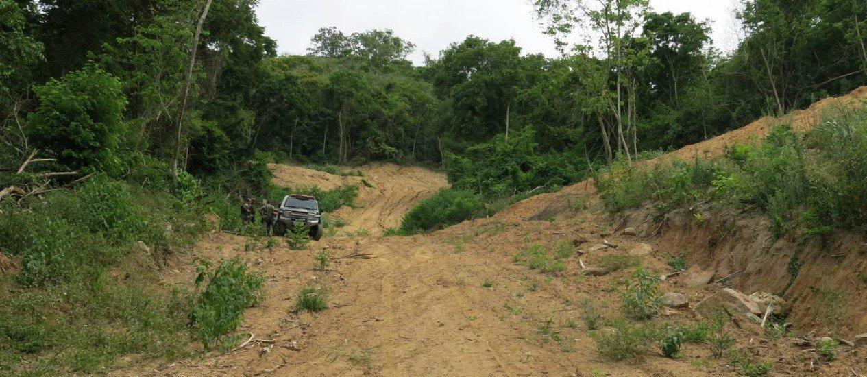Monitoramento de florestas por satélite flagra, em média, um desmatamento a cada dois dias no Rio